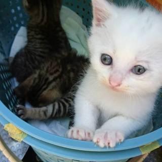 白猫 1ヶ月