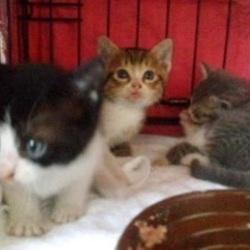 子猫の譲渡会