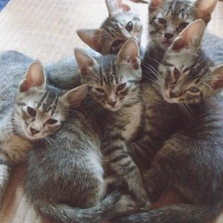 可愛い子猫五匹