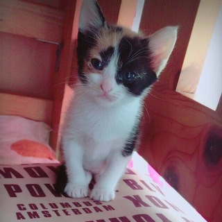 5月5日生まれの子猫です!