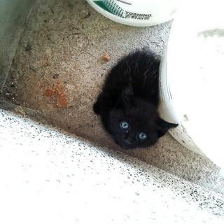 黒猫の赤ちゃんを保護しています