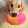 ボール遊びが好物ですっ♡