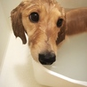 お風呂中。良い子にしてる♡