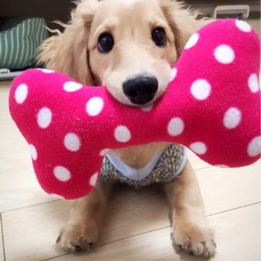 大好きなおもちゃ♡