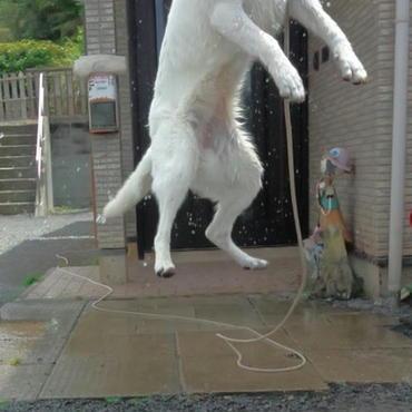 跳びます!跳びます!!