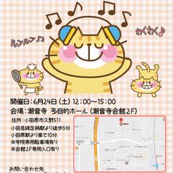 臨時開催!猫の里親会【小田原】 サムネイル1