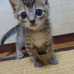 三重県津市 6月18日(日)子猫の譲渡会