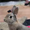 3歳のミニウサギの女の子です。