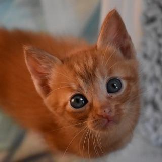 可愛い茶トラ子猫