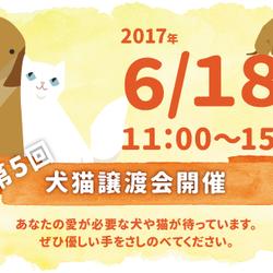 第5回犬猫譲渡会開催します(大阪吹田)