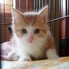猫まみれ実行委員会(保護活動者)
