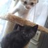超絶可愛い仔猫たち♪