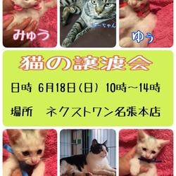 猫の譲渡会 三重県名張市
