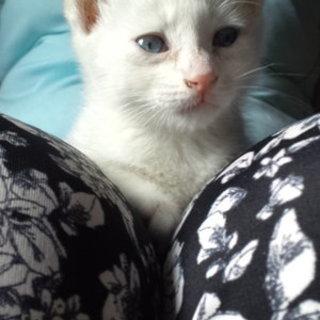 尻尾が長くて真っ直ぐの元気な白猫ちゃん