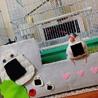 文鳥と猫、同時の飼育は可能でしょうか。