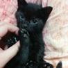 人が大好き黒猫ヤマト