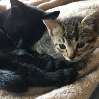 黒猫雄&キジ猫雌
