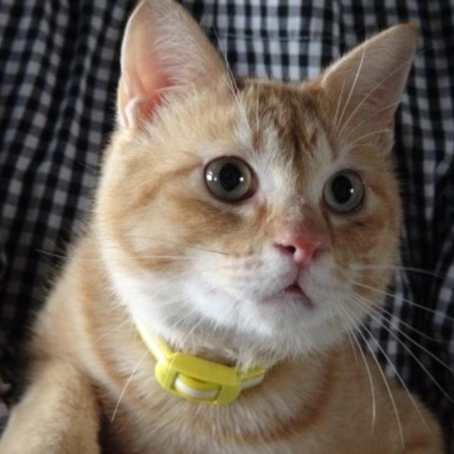KGP野良猫を減らす会のカバー写真