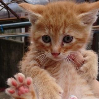 可愛い仔猫の里親募集
