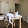 初めての猫にビヨンセを。熟年層にもおすすめです! サムネイル6