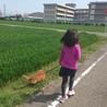 高崎アニマルランド、譲渡犬のお散歩。今は里親さんのもとです。