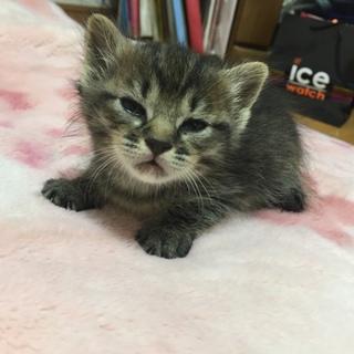 可愛い赤ちゃんの子猫ちゃん