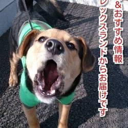 犬やペットロスでお悩みの方は必見、無料相談開催