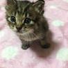 子猫ちゃんを大切に育ててくれる方