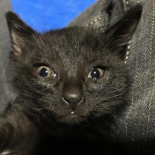 ③元気な黒猫4兄弟、家族を求めています。
