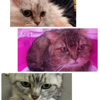 置き去り親子猫3匹