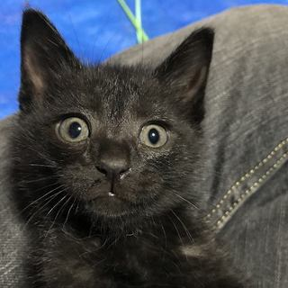 ④元気な黒猫4兄弟、家族を求めています。