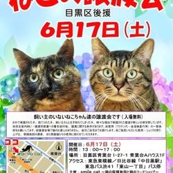 ★6月17日(土)「ねこの譲渡会(目黒区後援)」smile cat@中目黒(室内)