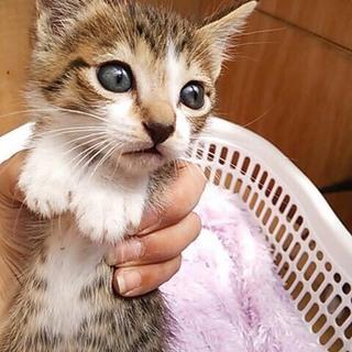 2ヶ月子猫軍団
