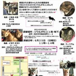 ムック王国主催 猫だけの譲渡会♡