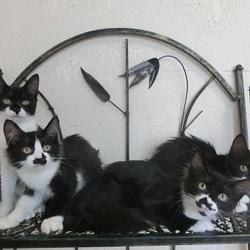 猫の方舟里親会