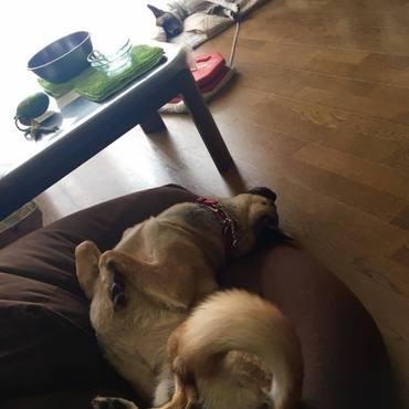 サリーちゃん見守り中の寝落ち・・