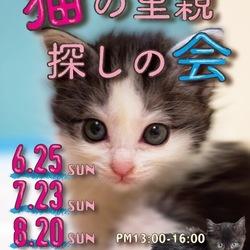 猫の里親探しの旅