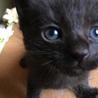 少し長毛の黒猫ちゃん