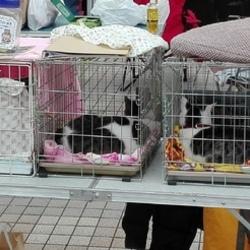 津久井橋本八王子犬猫の会