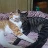 幸運を呼ぶ鍵しっぽ猫ちゃん、仲良し兄弟です。