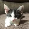 2ヶ月の子猫