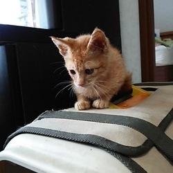 第9回 戸田ニャンコおたすけ隊 猫の里親会開催 サムネイル3