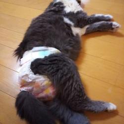 愛猫の死への覚悟