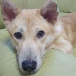 6月24日(土)に、愛知県蒲郡市で犬の譲渡会! サムネイル1