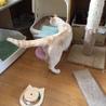 クリームベージュ☆おだやかな 1歳 マカロンくん サムネイル5