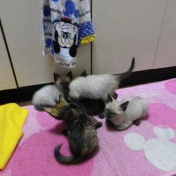 里親さん募集、6匹子猫 その1