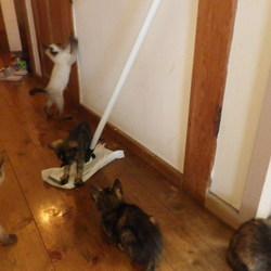 里親さん、募集中 6匹子猫 その2
