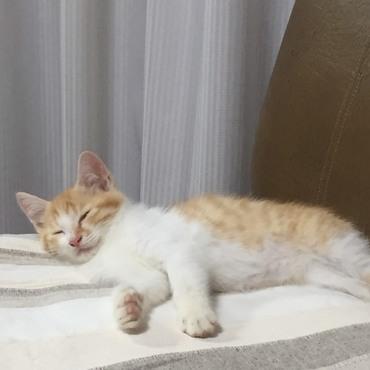 子猫時代のピー太