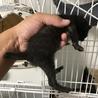 子猫4匹  サムネイル4