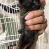 子猫4匹  サムネイル5